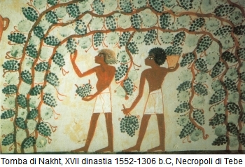 storia-del-vino-antico-egitto-tomba-nakht-necropoli-tebe-origini-del-vino